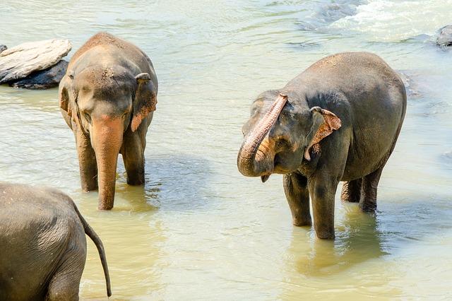 Vacances touristiques : les 2 principaux attraits du Sri Lanka à découvrir